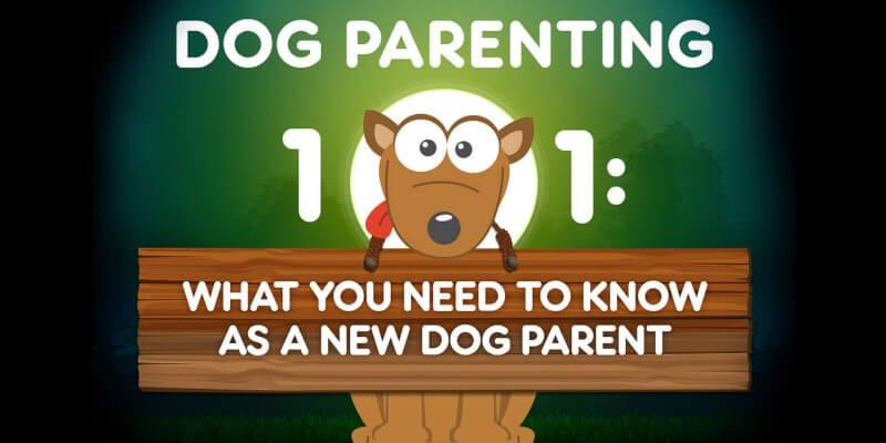 Dog Parenting 101