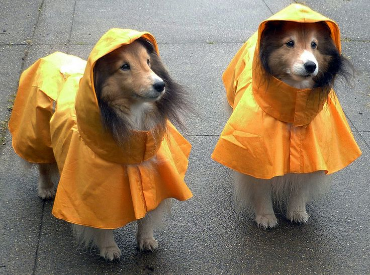 Reflective Dog Raincoat Waterproof Rain Jacket Poncho With Leash Hole Pocket For Small Medium