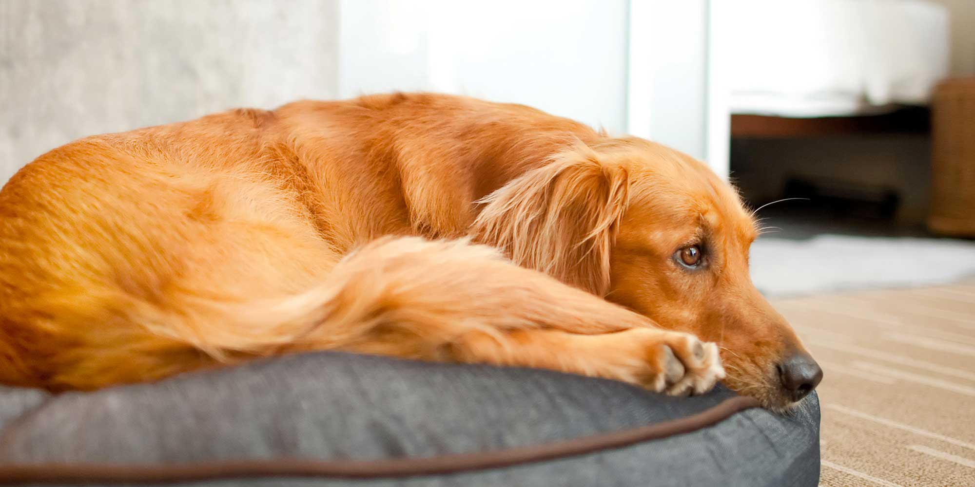 Reviews — Dog Breeding Supplies, Grooming Equipment & More