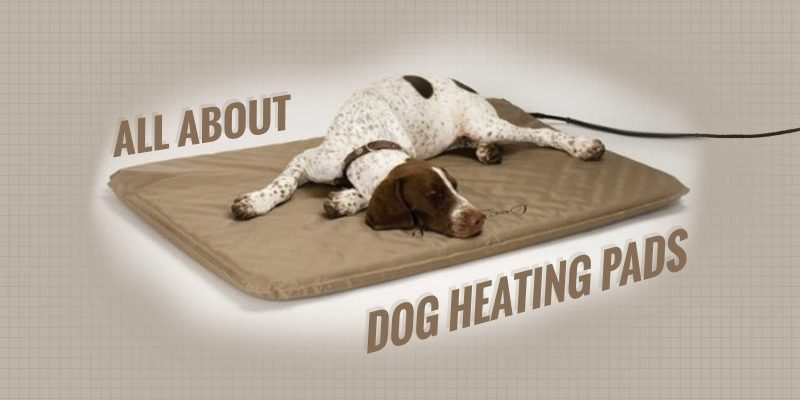 Dog Heating Pads — Buying Guide + Reviews!