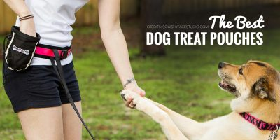 4 Best Dog Treat Pouches For Training