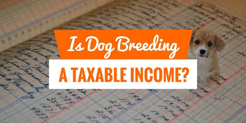 Is Dog Breeding a Taxable Income In The United States?