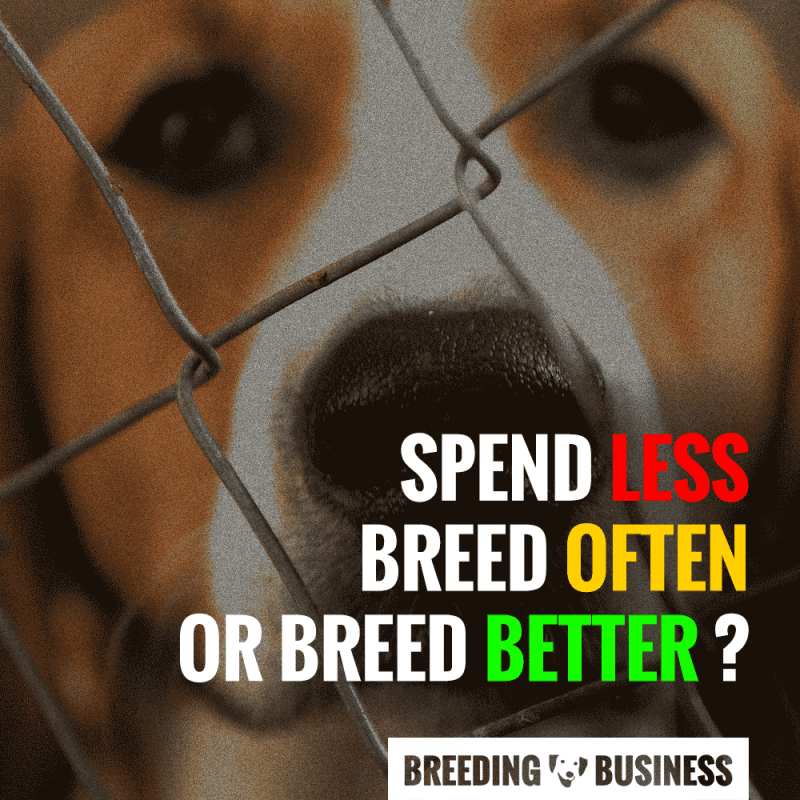 is dog breeding profitable
