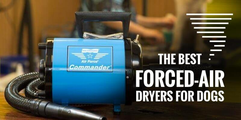 best forced air dryers for dogs