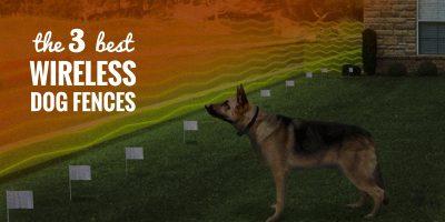 Top 3 Best Wireless Dog Fences