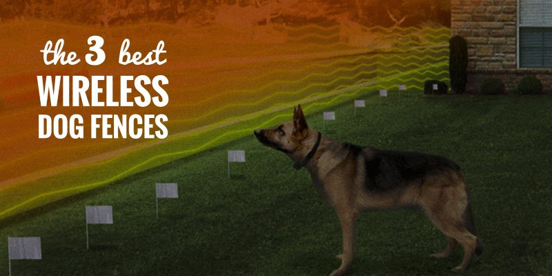 wireless dog fences reviews