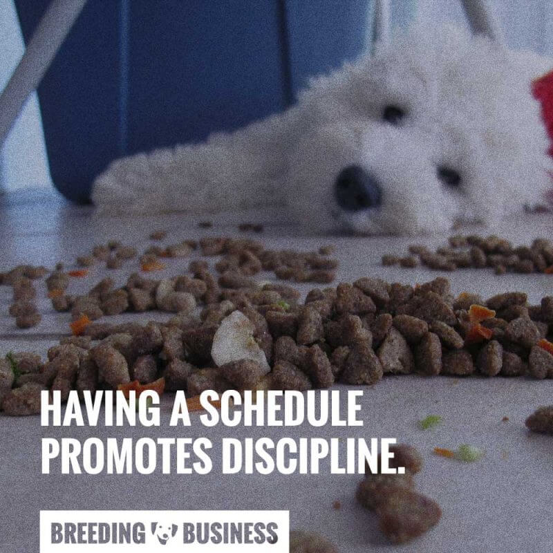 schedule meal routine for dogs
