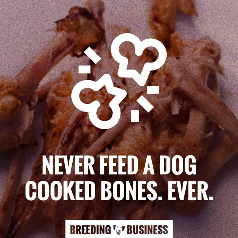 dog cooked bones never feed