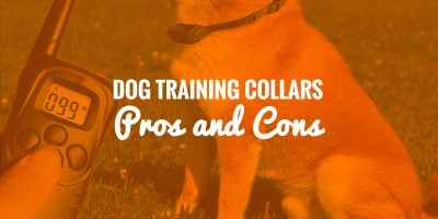 Pros & Cons of Dog Shock Collars (Training and Barking)