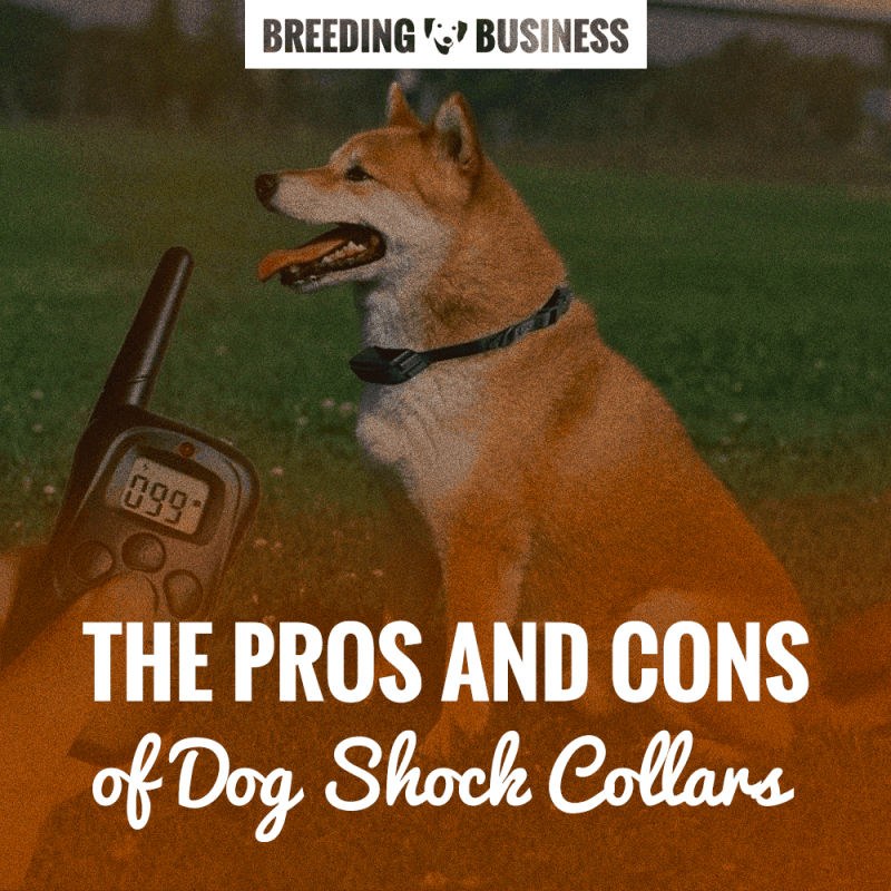 Pros & Cons of Dog Shock Collars