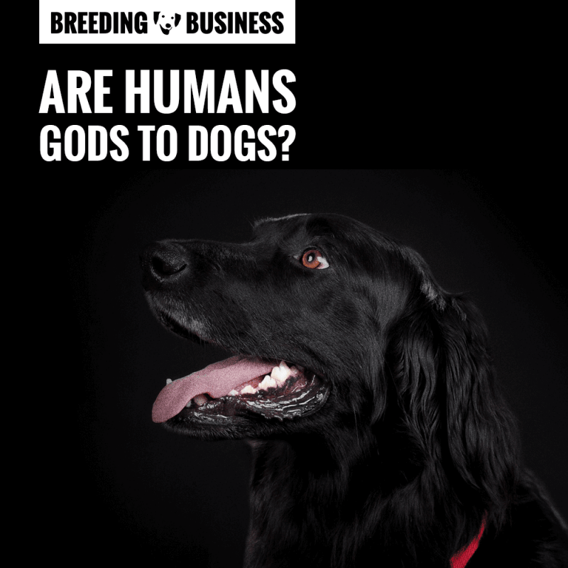 Are humans dogs' Gods? Well, not really.