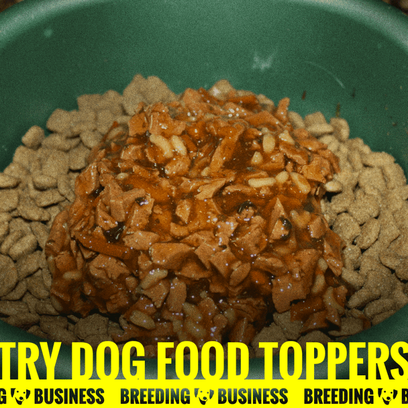 wet kibble food topper