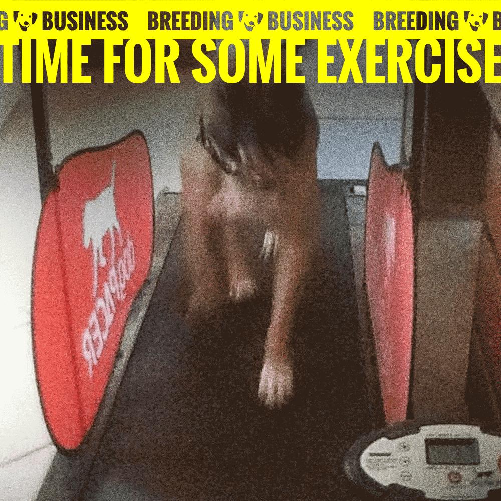 dog treadmill exercise