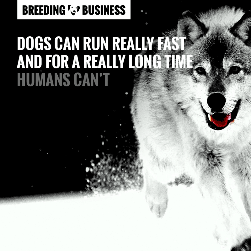 There are so many things dogs can do that humans simply cannot.