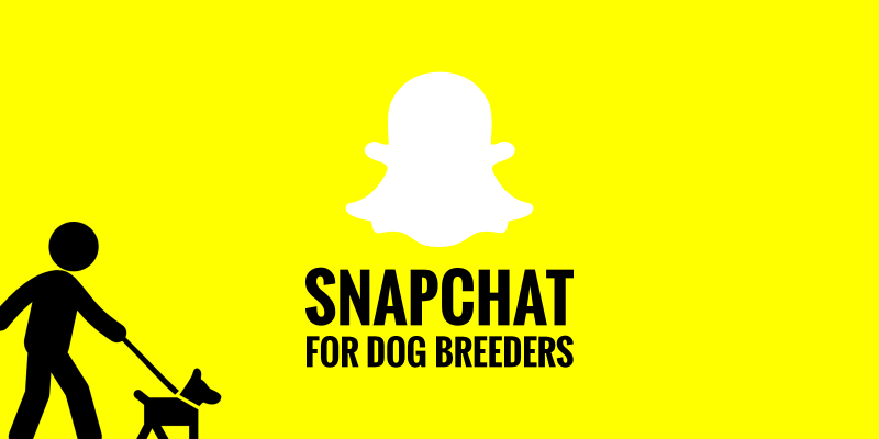 snapchat and instagram stories for dog breeders