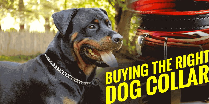 Choosing Between the Different Types of Dog Collars