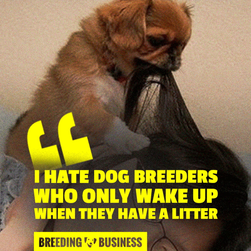 Dog breeders who suddenly showcase an enormous passion for their breed because they have a litter are pathetic.