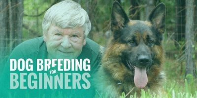 Dog Breeding for Beginners — What You Need To Know