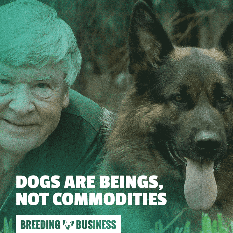 dogs are beings, not commodities