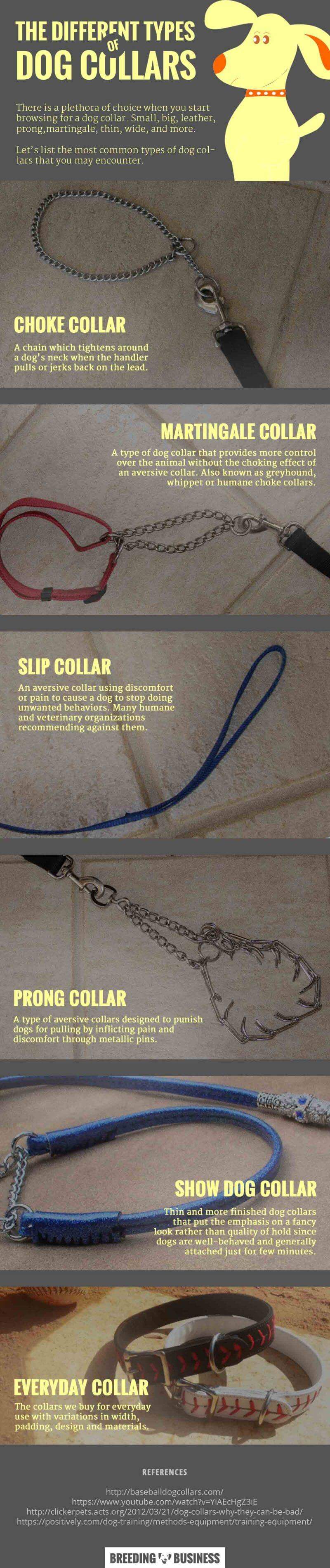 types of dog collars - infographics