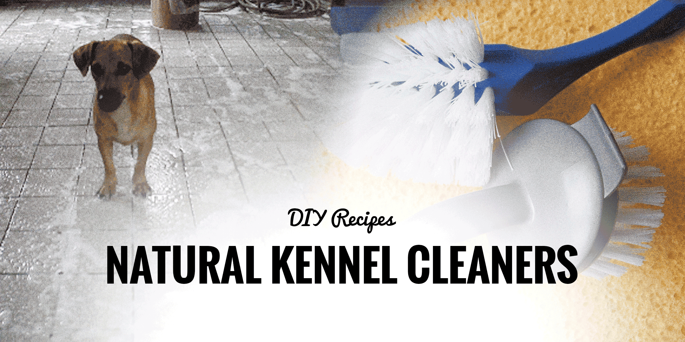 Cleaning Dog Kennel With Bleach