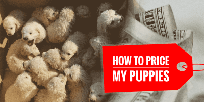 How Much To Sell a Puppy For?