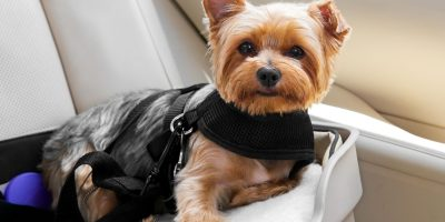 Best Dog Car Seats – 2021 Buying Guide for Booster Seats