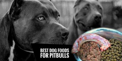 4 Best Dog Food for Pitbulls + Pitbull Diet Guide