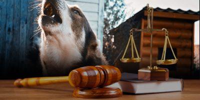Why Backyard Dog Breeding Cannot Be Criminalized