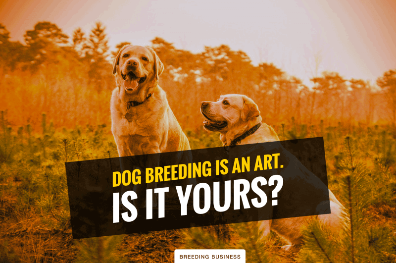 responsible dog breeding