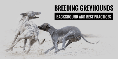 Breeding Greyhounds — Context, Future, and Best Practices