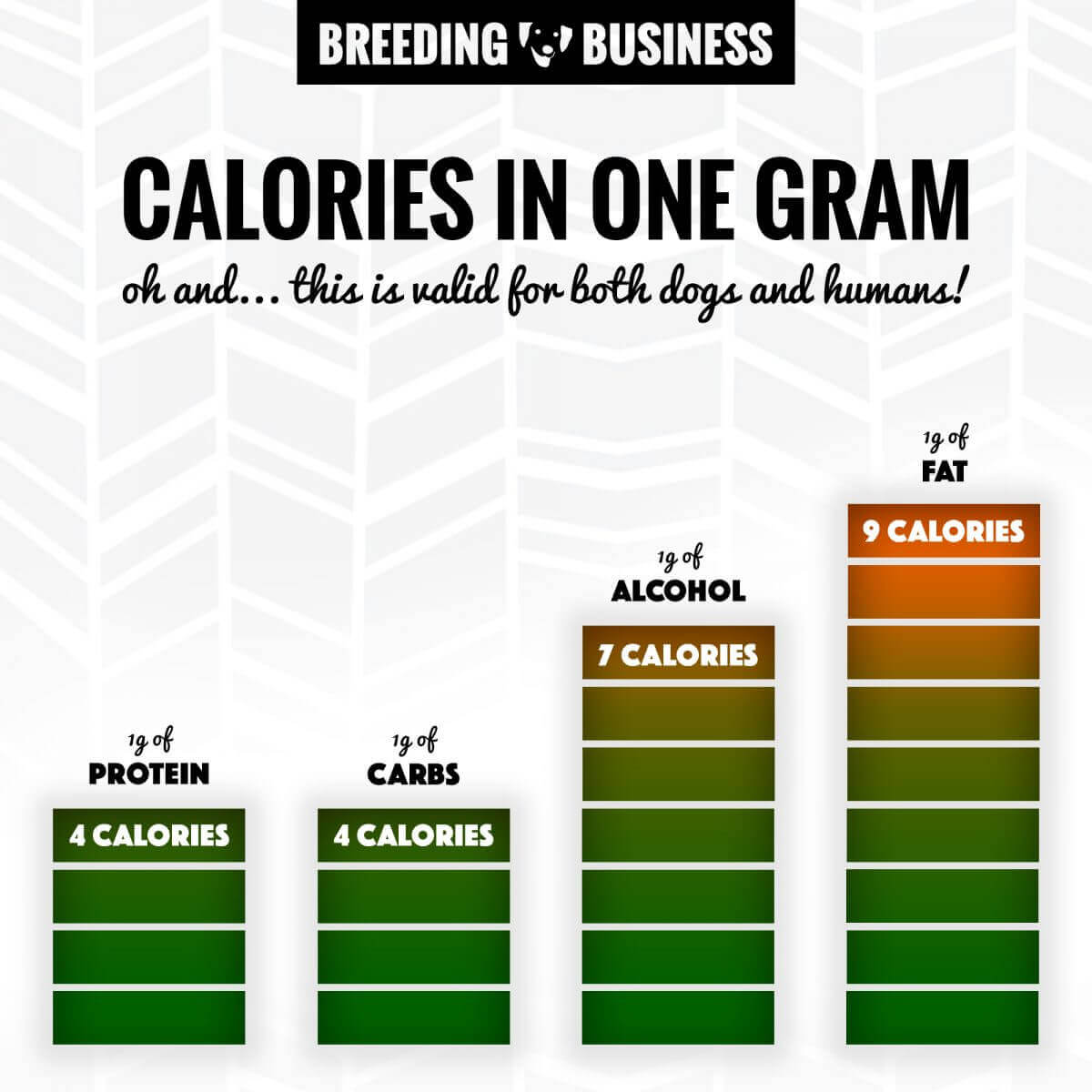 calories in one gram of protein, carbohydrates, alcohol and fat
