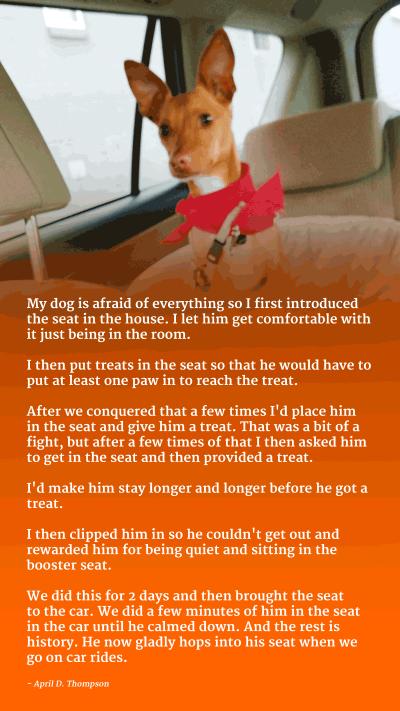 dog car seat training