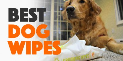 Best Dog Wipes — Antibacterial Wipes for Cleaning, Grooming, Earwax & Tartar