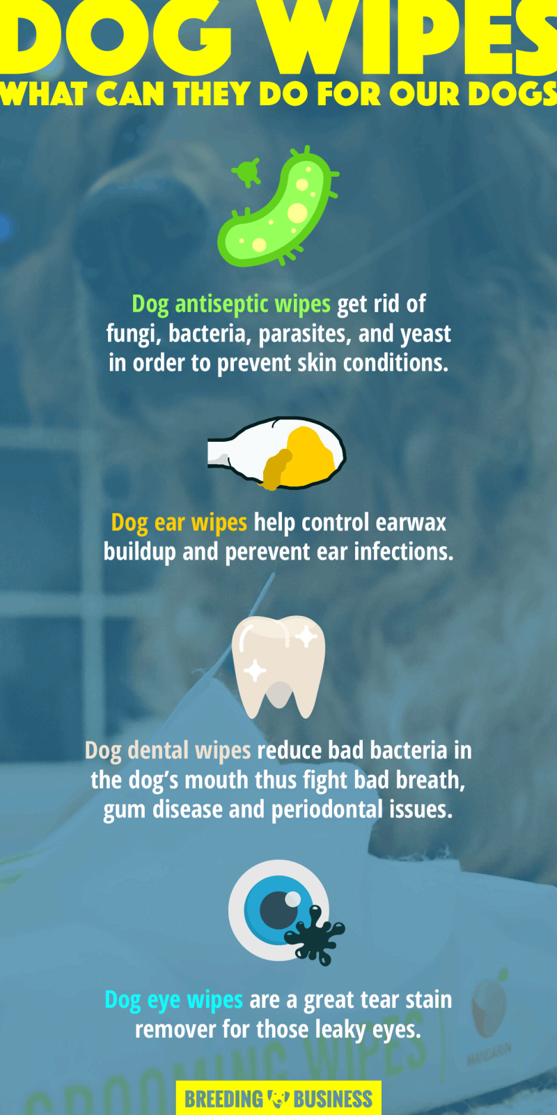 Benefits the best dog wipes have! (infographic)