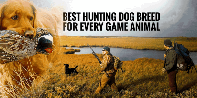 Best Hunting Dog Breeds for Every Game Animal