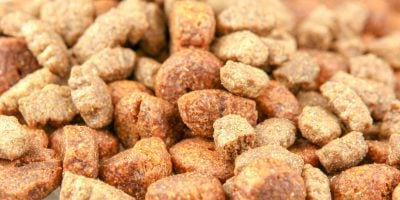 5 Best Grain-Free Dog Foods – Reviews and Buying Guide