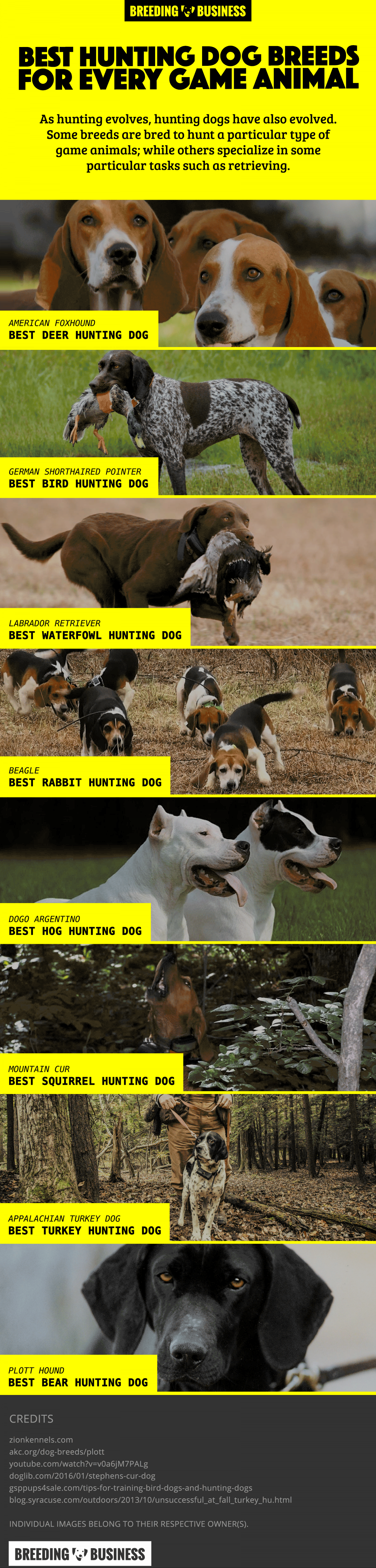 Game-Hunting Dog Breeds