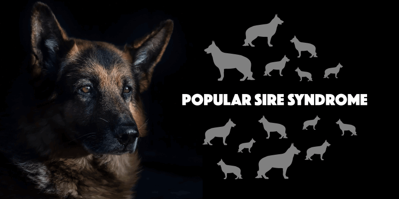 Popular Sire Syndrome In Dog Breeding