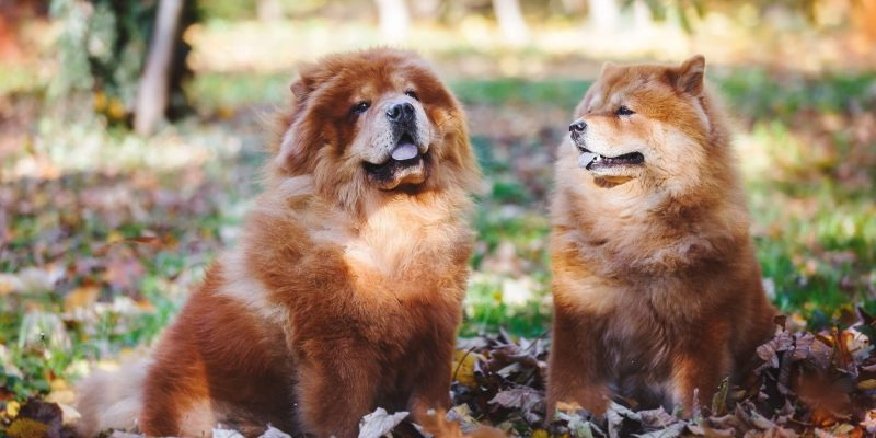 Why Are Female Dogs More Expensive Than Males?