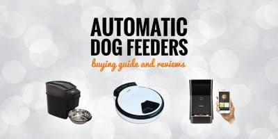 Top 5 Best Automatic Dog Feeders — Buying Guide and Reviews