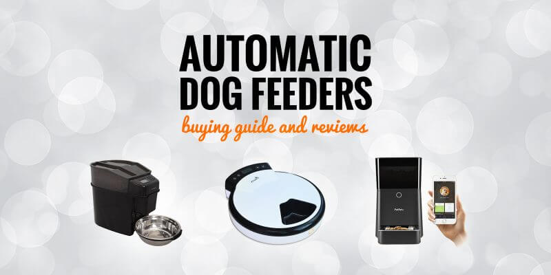 Top 5 best automatic dog feeders buying guide and reviews fandeluxe Image collections