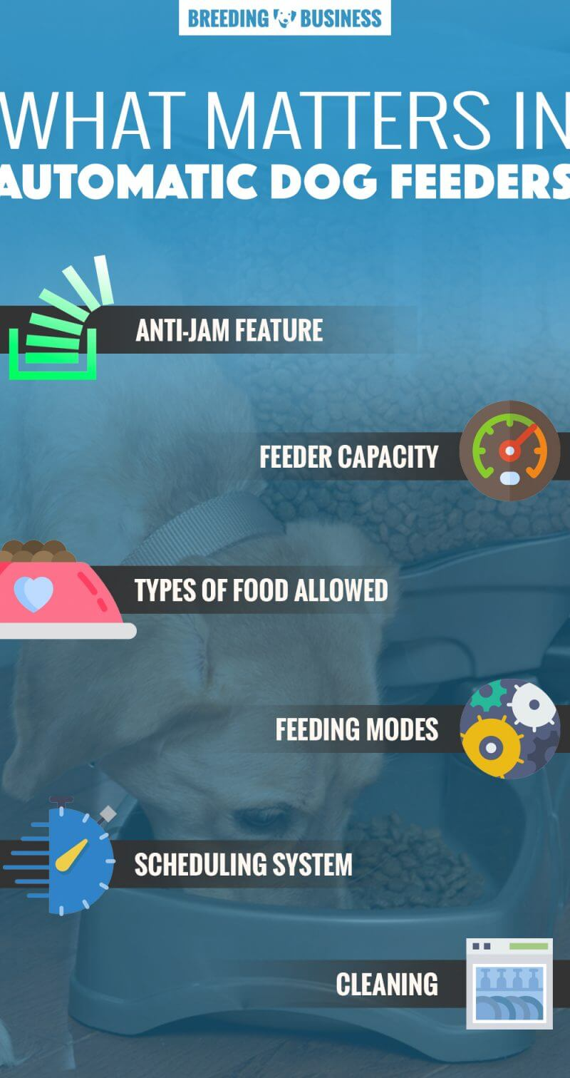 features of automatic dog feeders