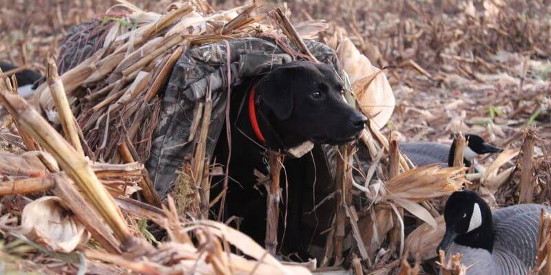 best hunting equipment for dogs