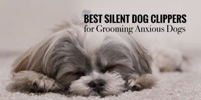 5 Best Silent Dog Clippers for Grooming Anxious Dogs