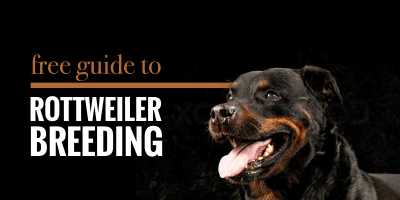 Guide to Breeding Rottweilers – Health, Best Practices & Future