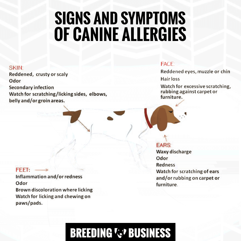 common symptoms of allergies in dogs