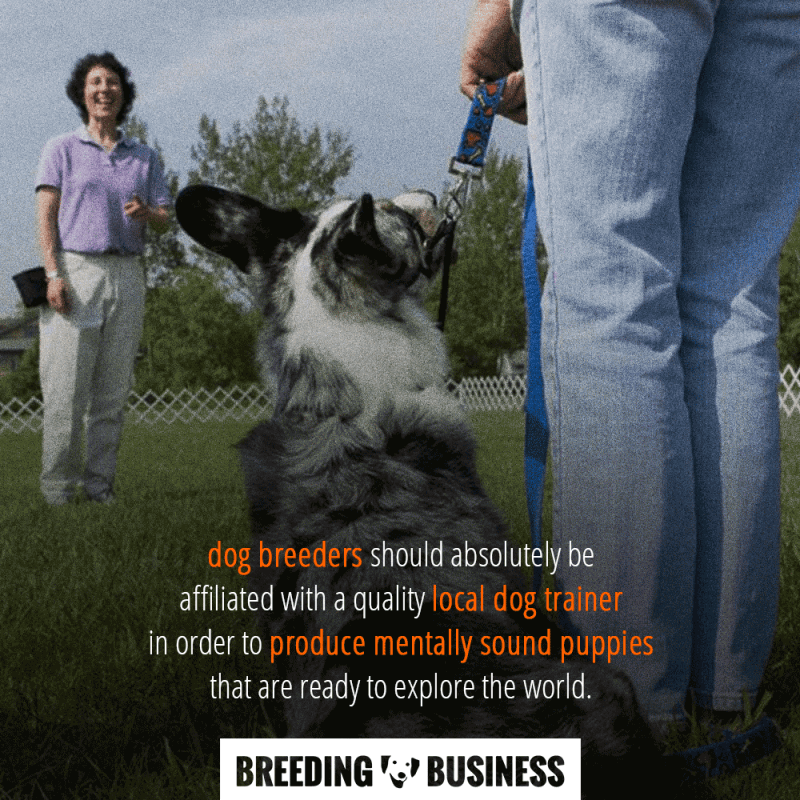 puppy socialization by dog trainers for dog breeders