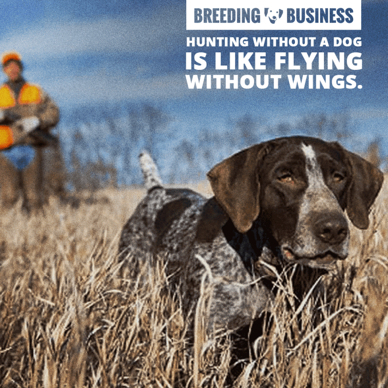 Quote about hunting dogs: Hunting without a dog is like flying without wings.