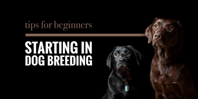 11+ Dog Breeding Tips For New Ethical Dog Breeders